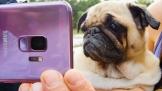 BuzzFeed và The Dodo giúp lan truyền video Slow-mo tạo bởi Galaxy S9/ S9+