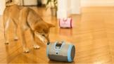 InnoVEX 2018: Laika giúp bạn chăm sóc cún yêu