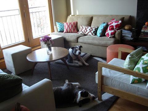mẹo sử dụng nội thất cho những nhà nuôi chó mèo